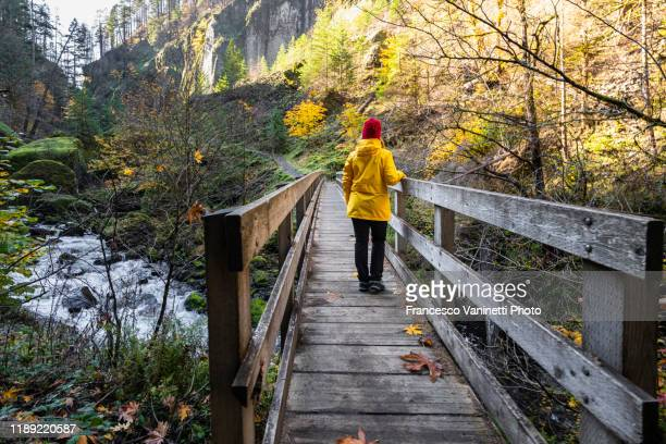 woman on the trail to wahclella falls, cascade locks, multnomah county, oregon, us. - only mid adult women stock pictures, royalty-free photos & images