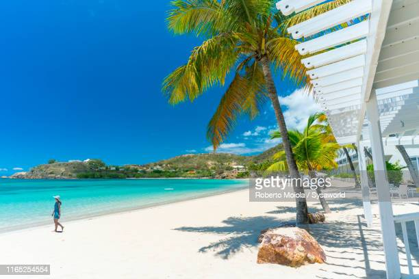 woman on tropical beach, caribbean, antilles - barbados stock pictures, royalty-free photos & images
