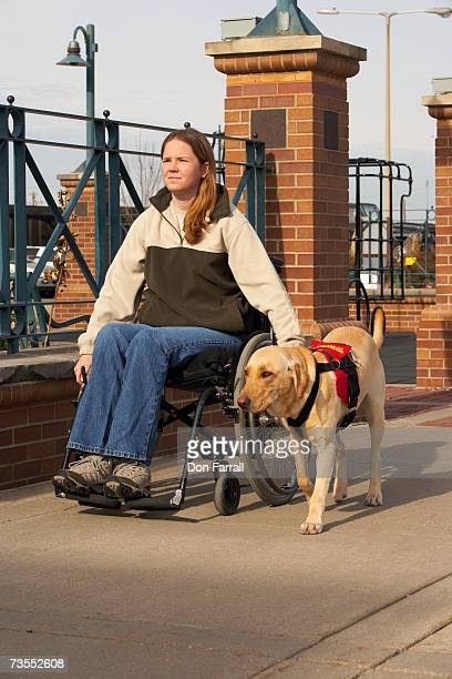 Woman on wheelchair with yellow Labrador