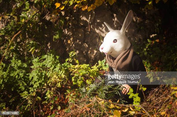 woman or rabbit? - rabbit mask stock pictures, royalty-free photos & images