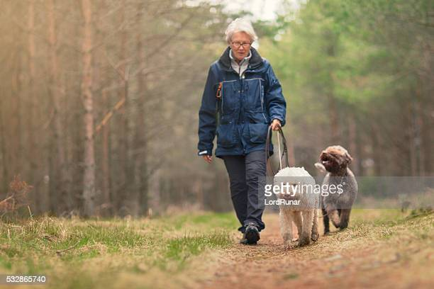 woman out walking two dogs in a forest - nordic countries stock pictures, royalty-free photos & images