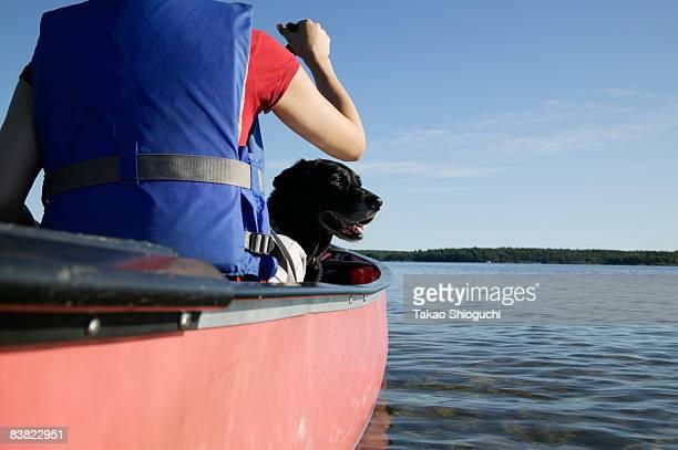 woman paddling a canoe - grupo mediano de animales imagens e fotografias de stock