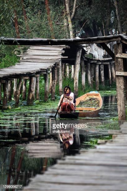 woman paddling a shikara a traditional boat on lake dal, srinagar, jammu and kashmir, india. - shaifulzamri stock pictures, royalty-free photos & images
