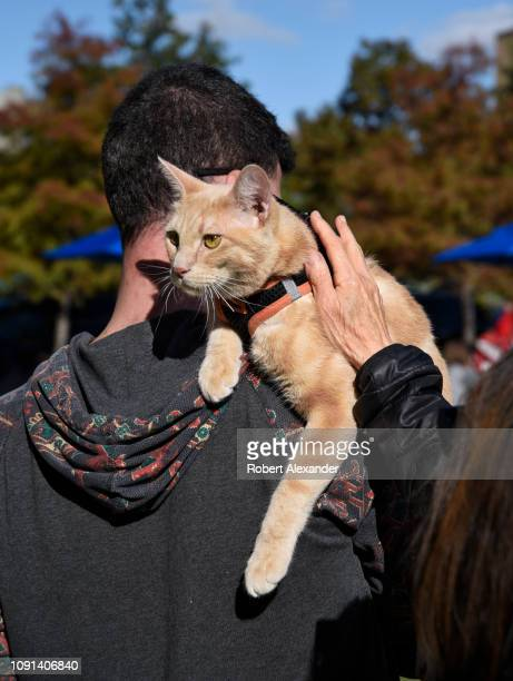 Woman pets a cat riding on his owner's shoulder in a park in San Antonio, Texas.