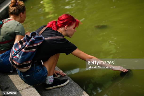 A woman pets a turtle during a warm day at Central Park on August 17 2018 in New York City Severe thunderstorms and even an isolated tornado could...