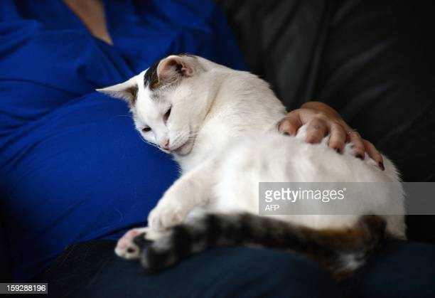 A woman pets her cat as it sits on her lap on January 10 in Strasbourg eastern France Stress insomnia and anxiety can be cured occcasionally without...