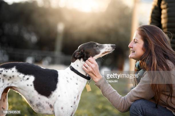 a woman petting her whippet dog - whippet stock pictures, royalty-free photos & images