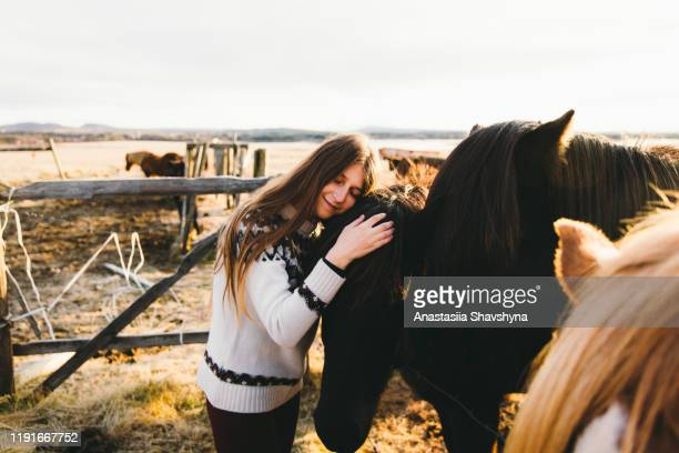 woman petting horses during bright sunrise in iceland - animal welfare stock pictures, royalty-free photos & images