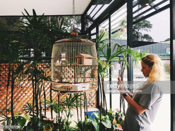 woman photographing birdcage against plants - 鳥篭 ストックフォトと画像