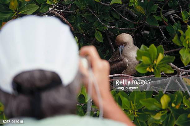 Woman Photographing Booby