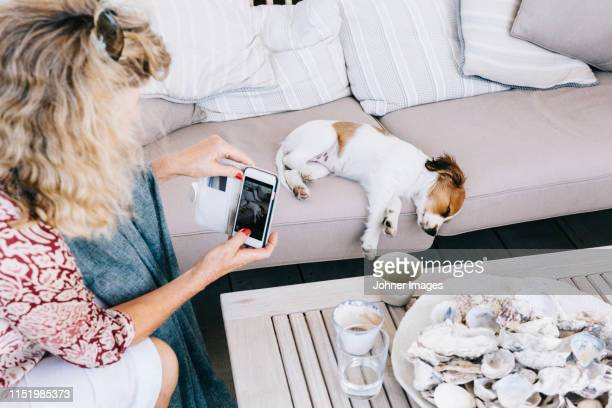 woman photographing dog - photographing stock pictures, royalty-free photos & images
