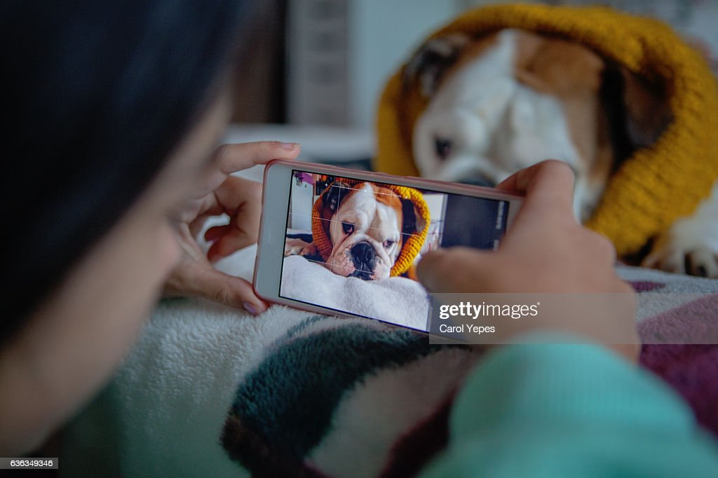Woman photographing dog with camera phone : Stock Photo