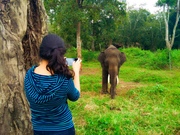 Woman Photographing Elephant In Forest