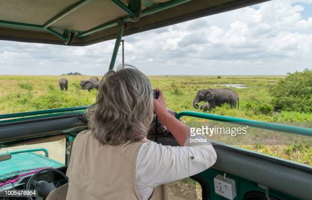 woman photographing elephants in safari jeep, africa - wildlife reserve stock pictures, royalty-free photos & images