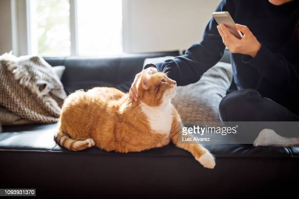 woman photographing her cat with smartphone - puss pics stock photos and pictures