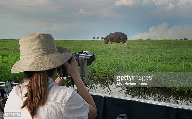 Woman photographing Hippopotamus from safari truck, Kasane, Chobe National Park, Botswana, Africa
