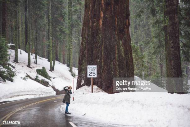 woman photographing in snow covered forest - bortes foto e immagini stock