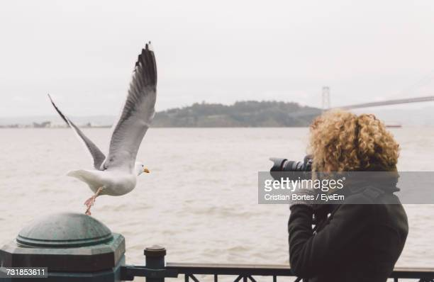 Woman Photographing Seagull With Dslr By River Against Clear Sky