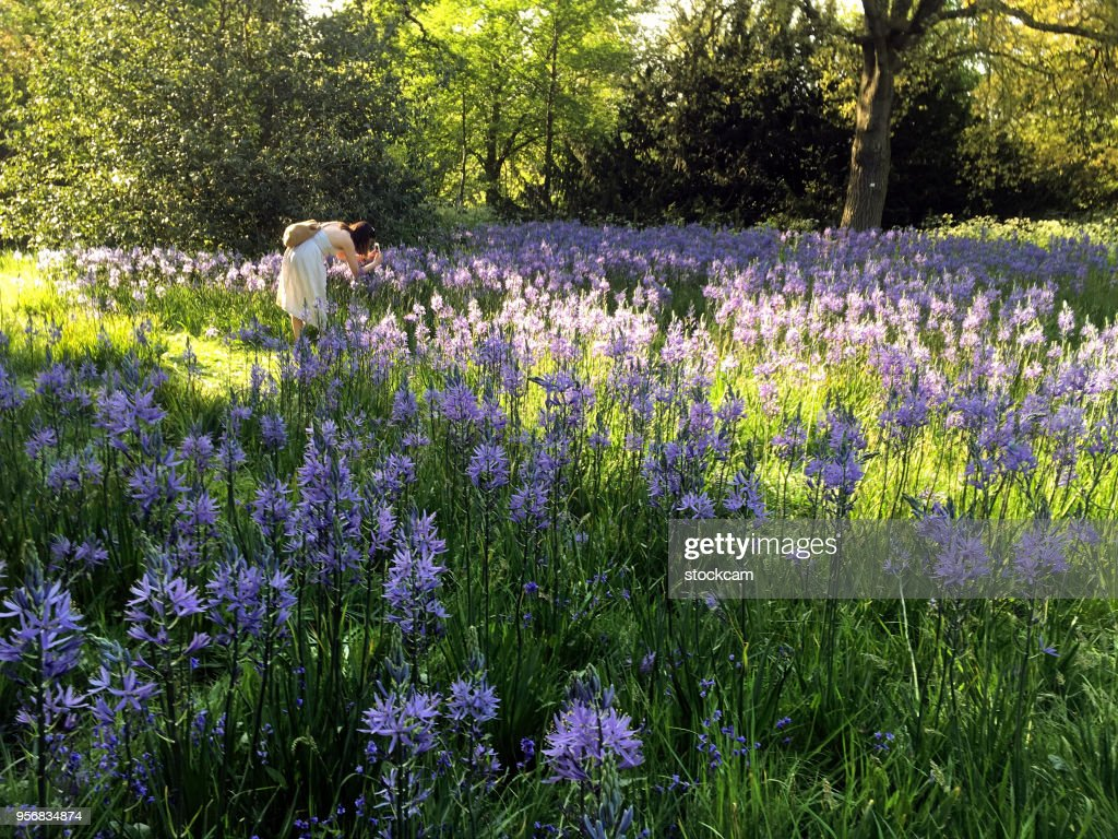 Woman Photographing Spring Flowers In England Stock Photo Getty Images