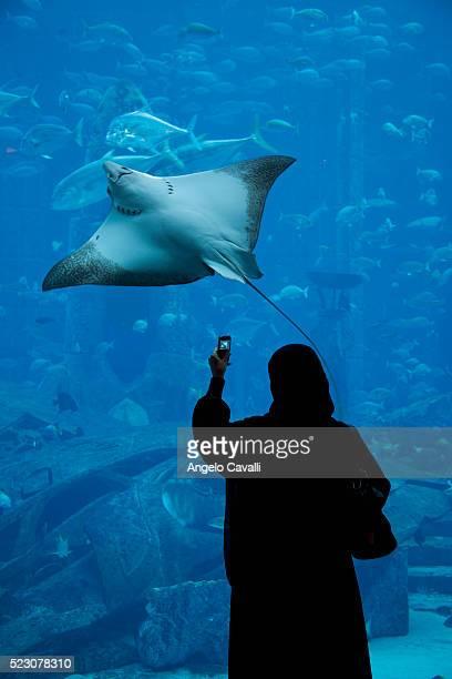 Woman photographing stingray in Atlantis Aquarium at Atlantis Hotel