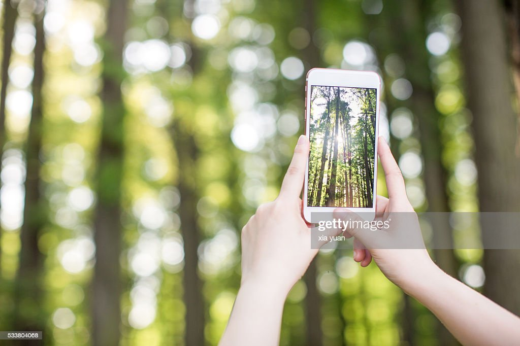 Woman photographing trees through smart phone : Foto stock