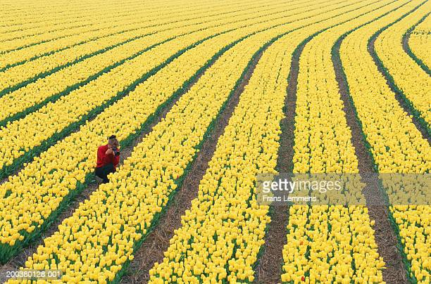 Woman photographing tulips on farm, elevated view, spring