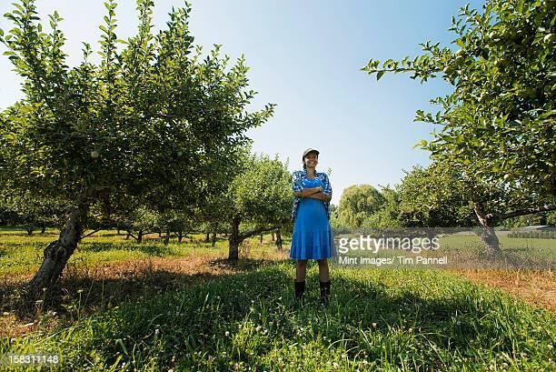 Mulher escolher maçãs no Pomar de Árvores de fruto.