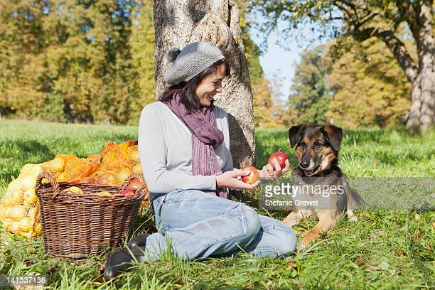 woman picking apples with dog - stefanie grewel stock-fotos und bilder