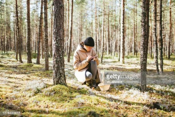 vrouw die paddestoelen in bos plukt - foerageren stockfoto's en -beelden