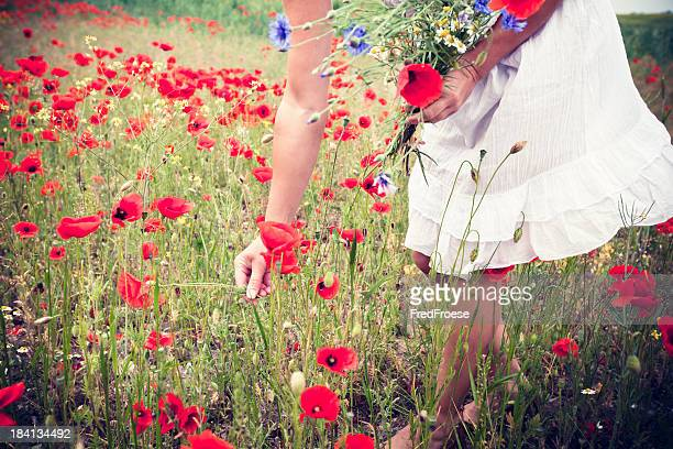 Woman picking poppy flowers