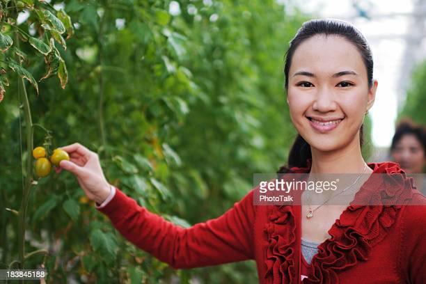 Woman Picking Tomatoes - XLarge