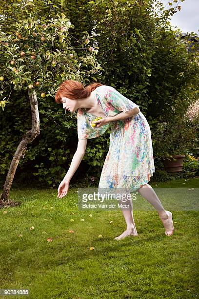 woman picking up apples from appletree.