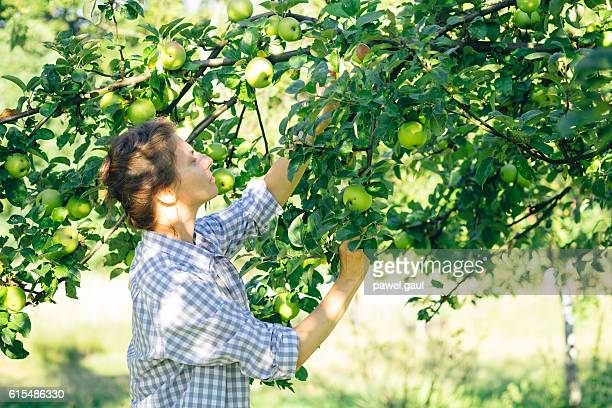 Woman picking up apples
