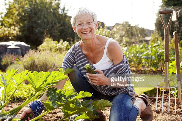 Woman picking vegetables on allotment