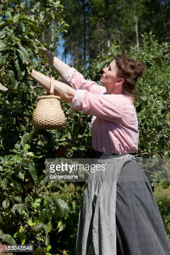 Woman Picks Apples In Old Country Dress Clothing Stock Photo