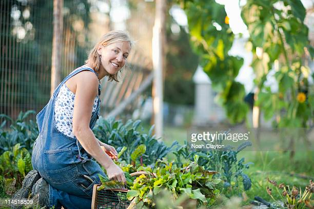 Woman picks chard from home garden.