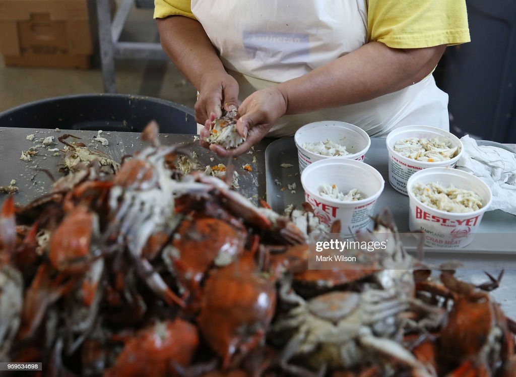 A woman picks crabs at the W.T. Ruark Seafood Co., on May 17, 2018 in Hoopers Island, Maryland. Due to a new lottery system this year several seafood companies failed to get temporary H-2B visas for their mostly Mexican workforce that has been coming to the Maryland eastern shore for over two decades to pick the crab meat that is sold in restaurants and stores on the east coast.