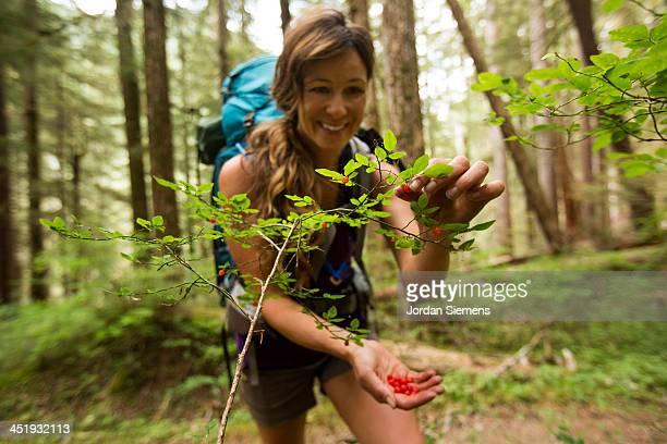 Woman picks fresh berries in rain forest.