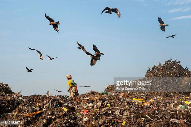 A woman picks through trash in a landfill surrounded by vultures on November 17 2013 in Dhaka Bangladesh Bangladesh currently holds one of the lowest...