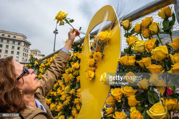 A woman places a yellow rose to claim freedom for Catalan political prisoners Catalunya celebrates the 'Day of Sant Jordi' the day of books and roses...