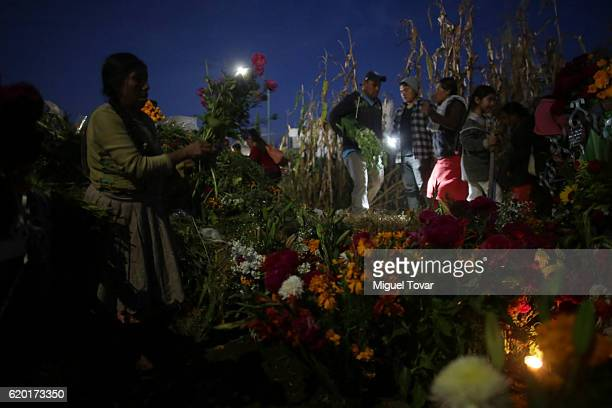 A woman places cempasuchil flowers on a relative grave as people arrives at the local cemetery during the Day of the Dead celebration known in...