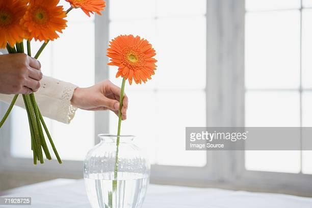 woman placing flowers in vase - positioning stock pictures, royalty-free photos & images