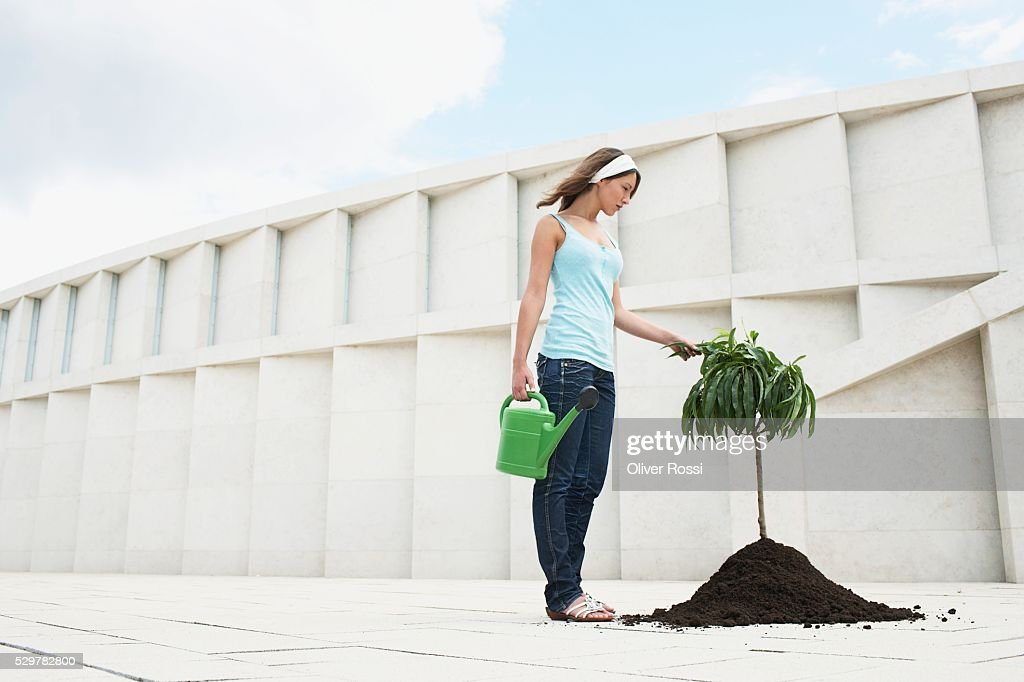 Woman Planting a Tree : Stockfoto