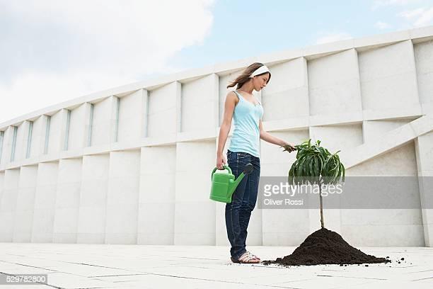 woman planting a tree - activista fotografías e imágenes de stock