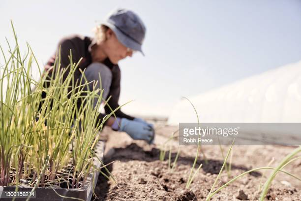 a woman planting crops on an organic farm - robb reece stock-fotos und bilder