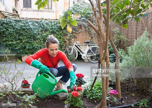 woman planting flowers in garden - watering stock pictures, royalty-free photos & images