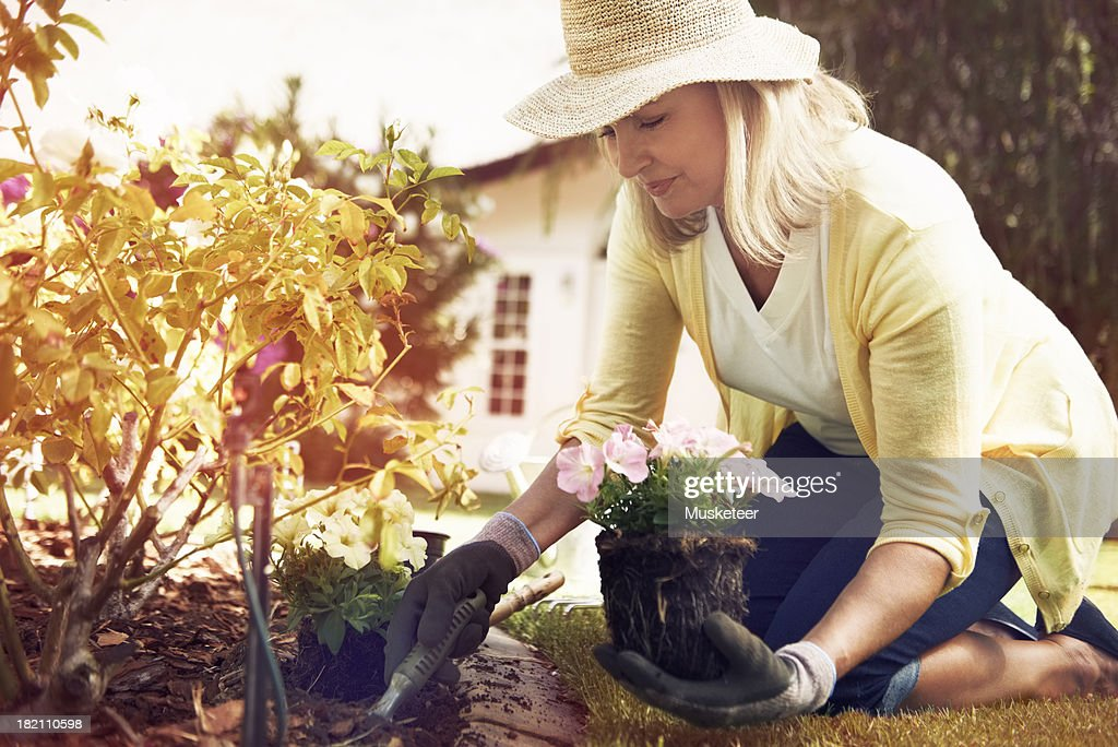 Woman planting flowers in her backyard : Stock Photo