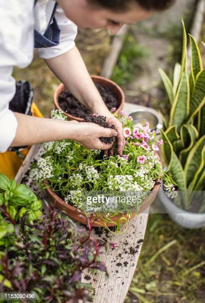 花を植える女性 - 造園師 ストックフォトと画像