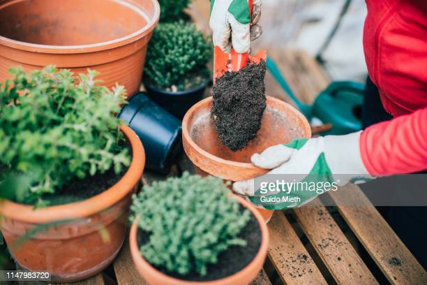 woman planting herbage. - urban garden stock pictures, royalty-free photos & images