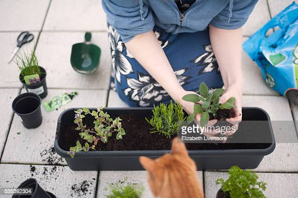 Woman planting herbs in a trough